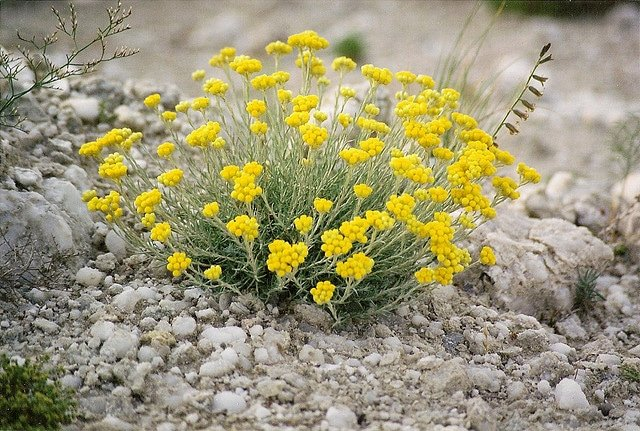Image Result For Tall Perennial Flowers For Shade