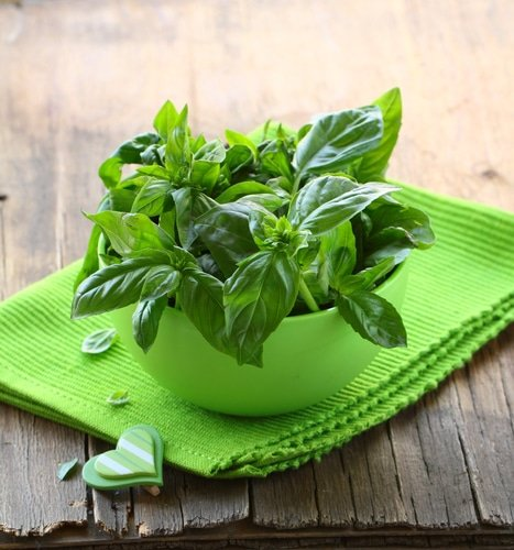Basil for Skin, the Natural Cleanser and Purifier