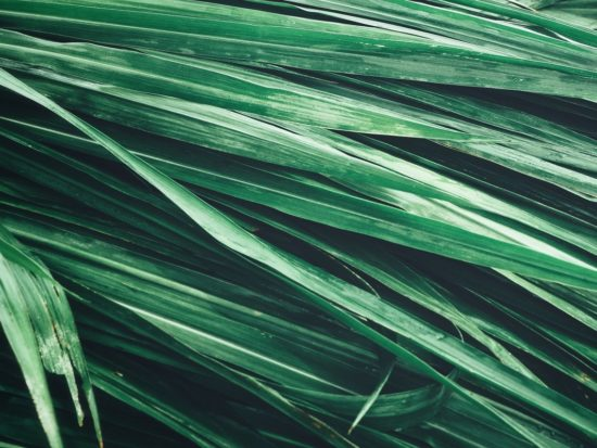 Vetiver for Skin: Fade the Appearance of Dark Spots
