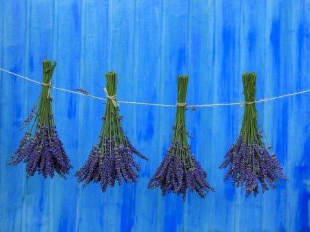 lavender-hanging