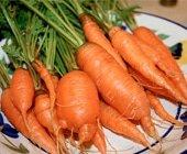 carrotsfi