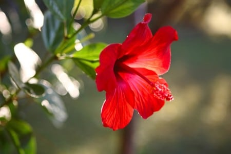 The wonders of the hibiscus.