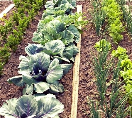 5 Early Fall Crops To Plant Right Now