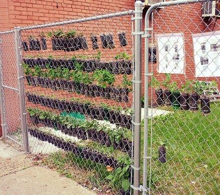 Vertical Gardening - Fence