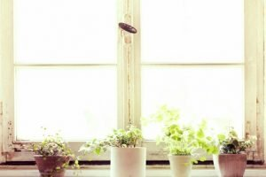 14 Plants to Help Clean the Air in Your Home