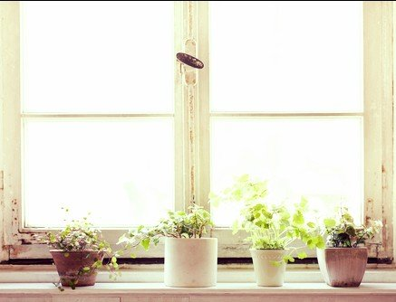Plants that clean air