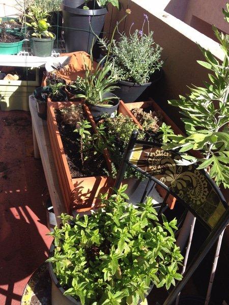 Aubrey's Garden - Skin Care Herbs