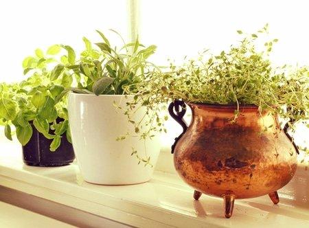 Skin Care Herbs Photo
