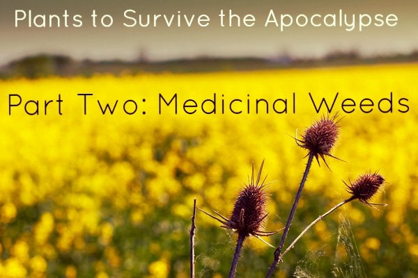 medicinal weeds