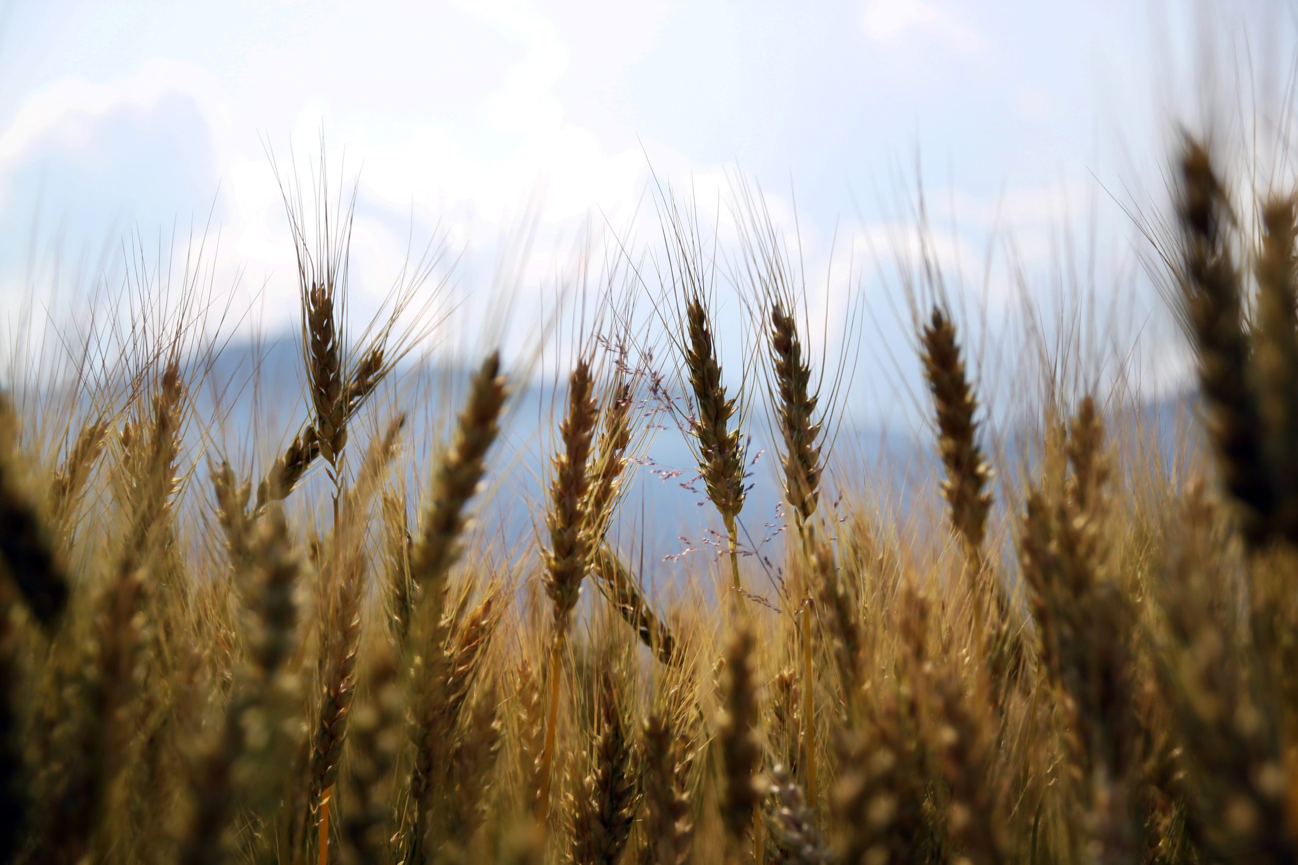 You can try wheat and barley to remove facial hair if your skin isn't too sensitive.