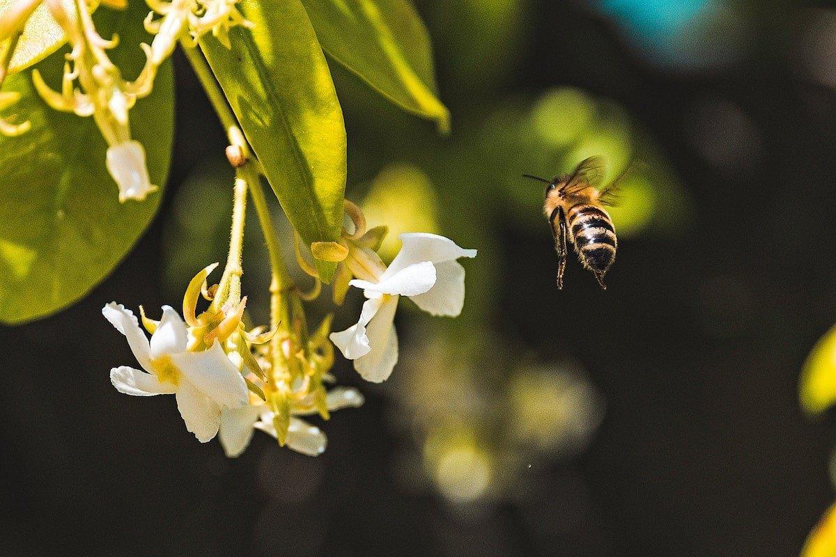 spring_allergies_Natural_remedies