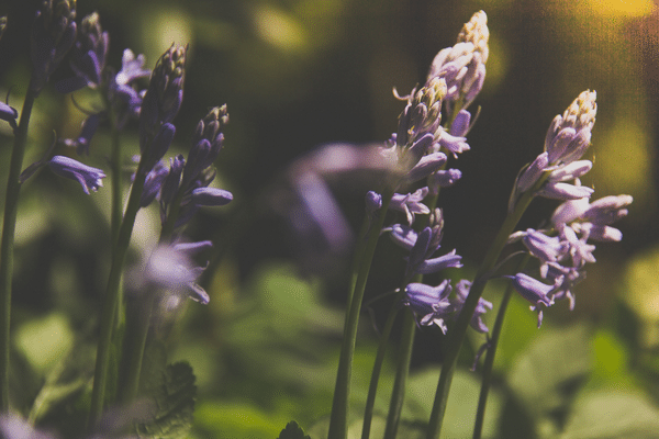 3 Myths About Lavender (And What It's Actually Good For)