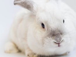 Is Your Makeup Brand Really Cruelty Free? You May Want To Take A Second Look.