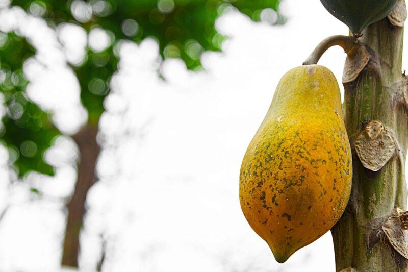 9 Healthy Reasons to Indulge In the Tropical Taste of Papaya