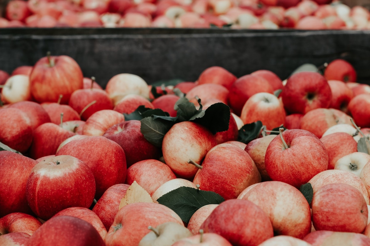 Apple Extract: A Wild Ally in Skin Care