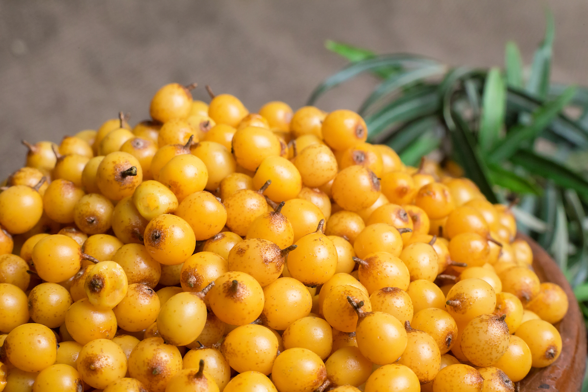 Sea Buckthorn Berries, the Superfood for Your Skin 1