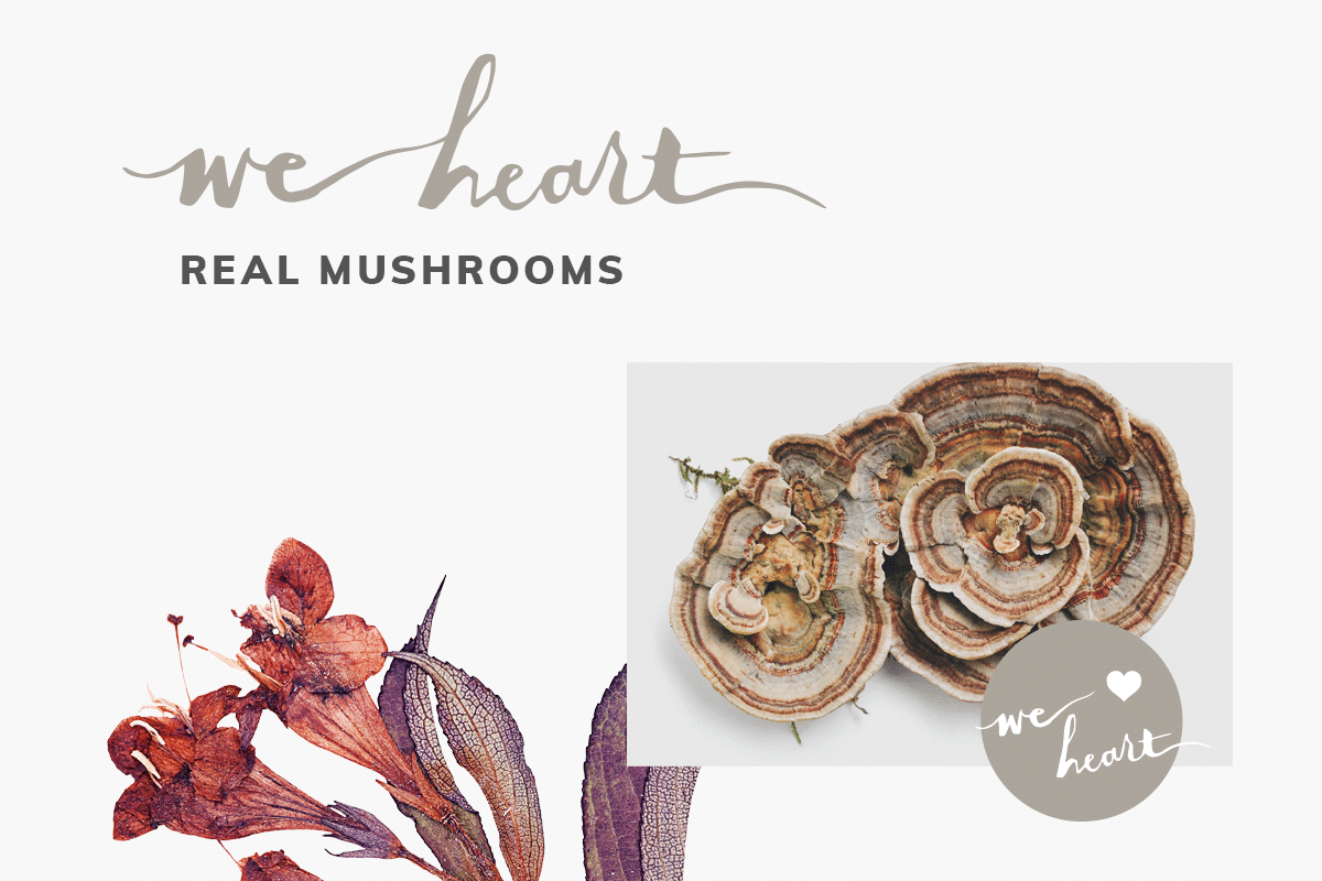 april2018_newsletter_realmushrooms