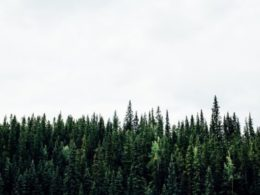 Forest Bathing 101: What is it and the 6 Benefits for Your Body