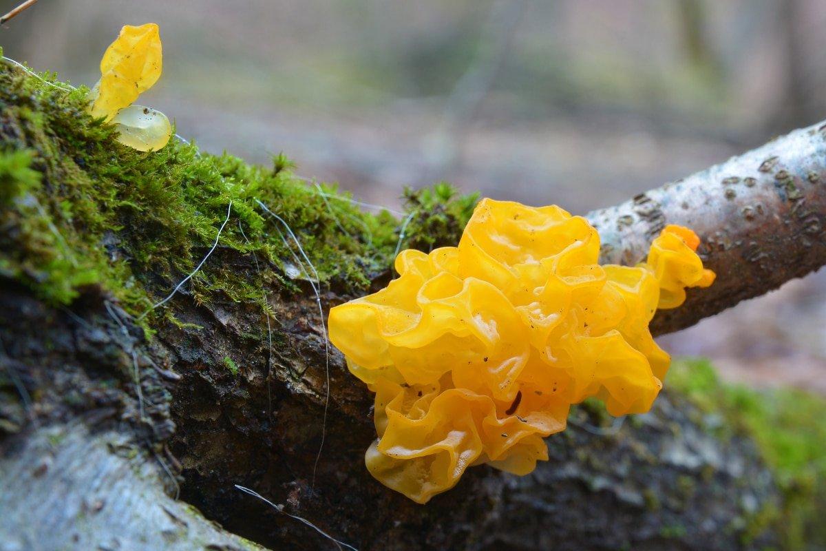 tremella_mushroom_moisturizer_skincare_serum