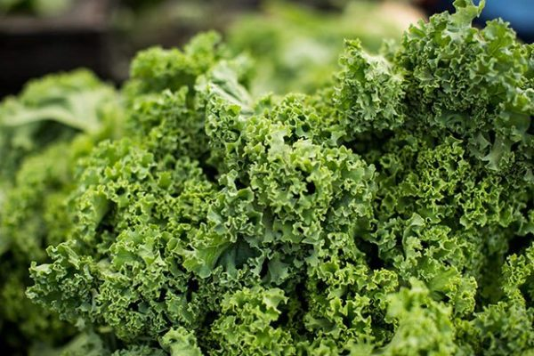 nutrient rich detoxifying kale