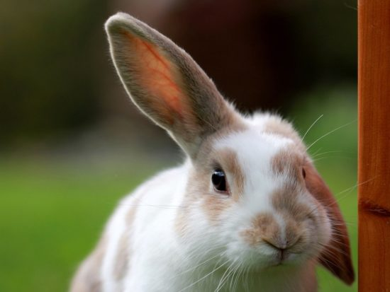California Becomes First State to Ban Animal Testing