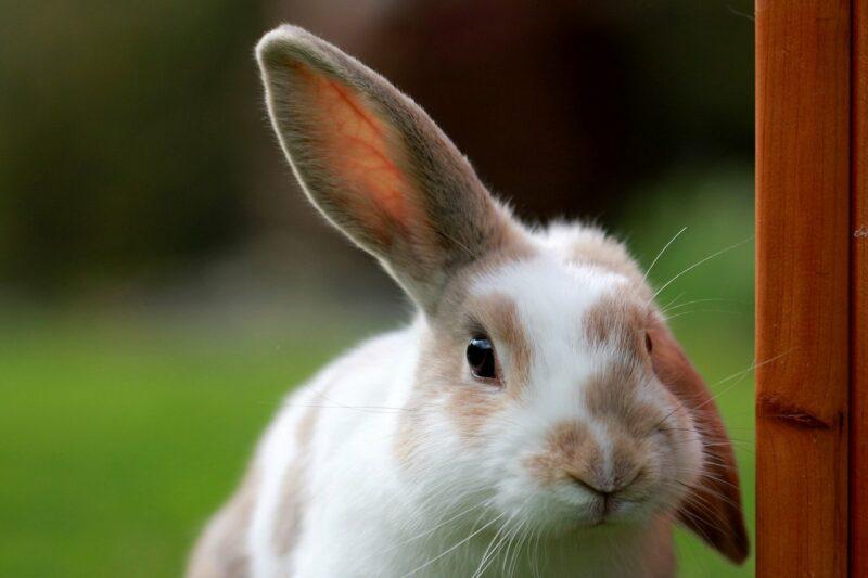 california banning animal testing