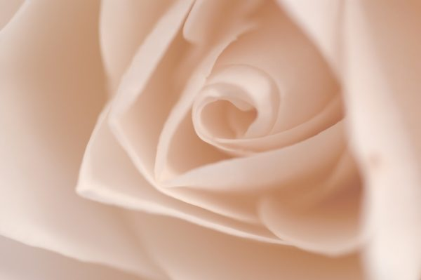 Choosing petals for your DIY rosewater