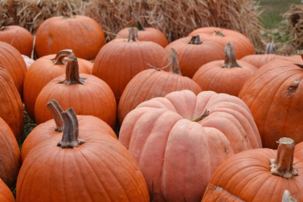 Fall is Here! 5 Home Beauty Uses for Pumpkin 5