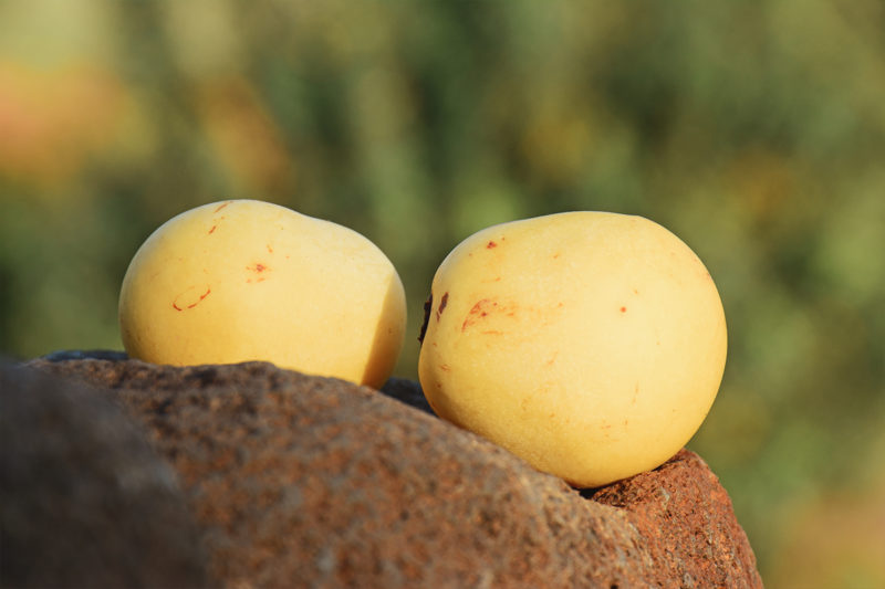 Ingredient Spotlight: Baobab, Marula, Mongongo, and Moringa.