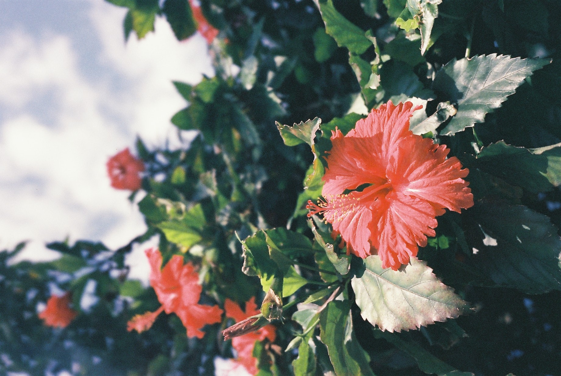 Hibiscus can help reduce the appearance of fine lines and wrinkles.